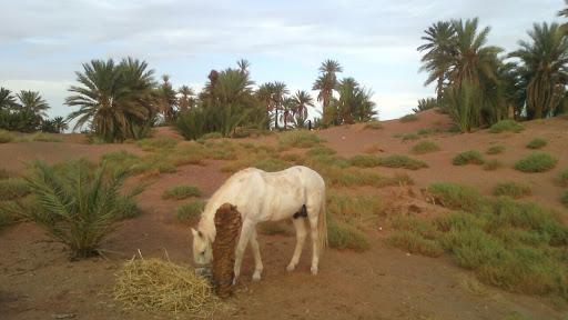 turismo-responsable-y-sostenible-en-marruecos-16