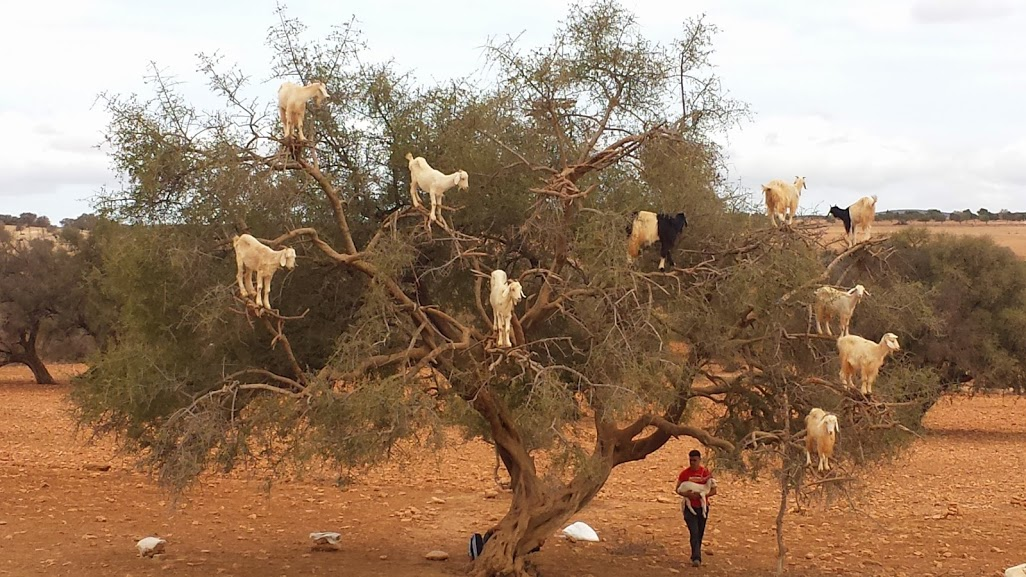 guía-de-essaouira-viajes-amazigh-marruecos-12