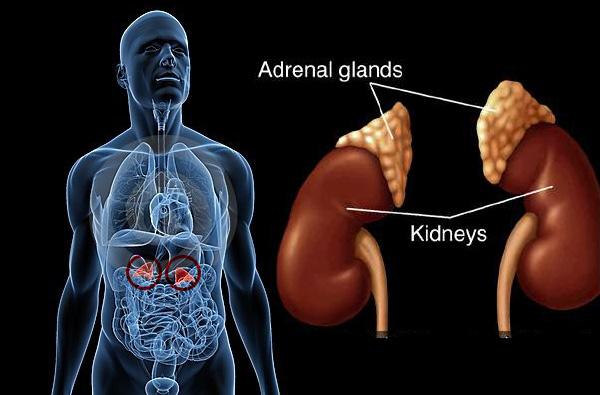 Fungsi Adrenal: 4 Hormon yang Dihasilkan Kelenjar Adrenal