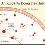 Tips Aman Antioksidan: Efek Samping Polifenol bagi Kesehatan