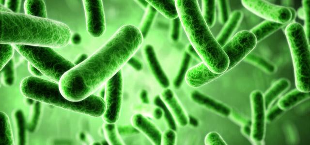 Inilah 14 Bakteri yang Menguntungkan bagi Manusia!