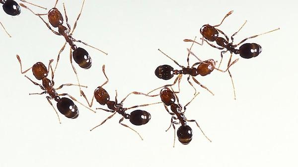 Cara Basmi Semut: 14 Resep Alami untuk Mengusir Semut