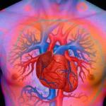 Inilah 10 Fakta Unik & Menarik tentang Jantung Manusia!