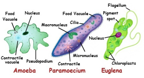 Organisme Bersel Tunggal