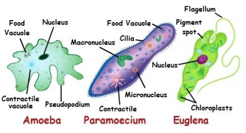 Struktur Makhluk Hidup