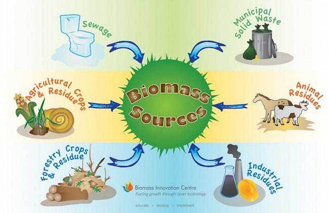 Apa itu Energi Biomassa? Definisi dan 4 Contohnya