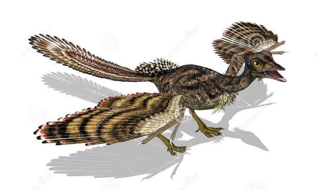 burung archaeopteryx