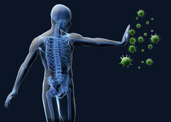 cara kerja sistem kekebalan tubuh