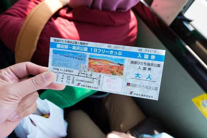 Hitashi seaside park (3)