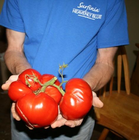 Two pound tomatoes