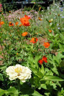 flower-susan-lindquist4