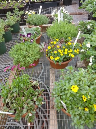 We do custom planters