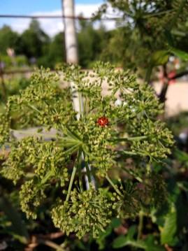 Angelica & Ladybug