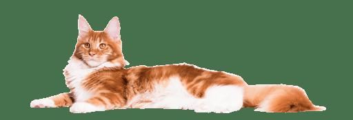 Cat_Website