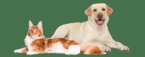 Dog&Cat_Website
