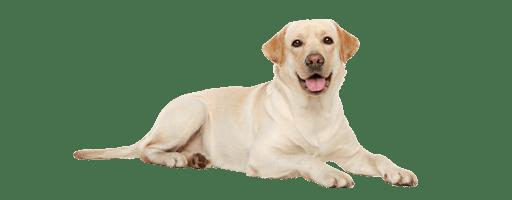 Dog_Website