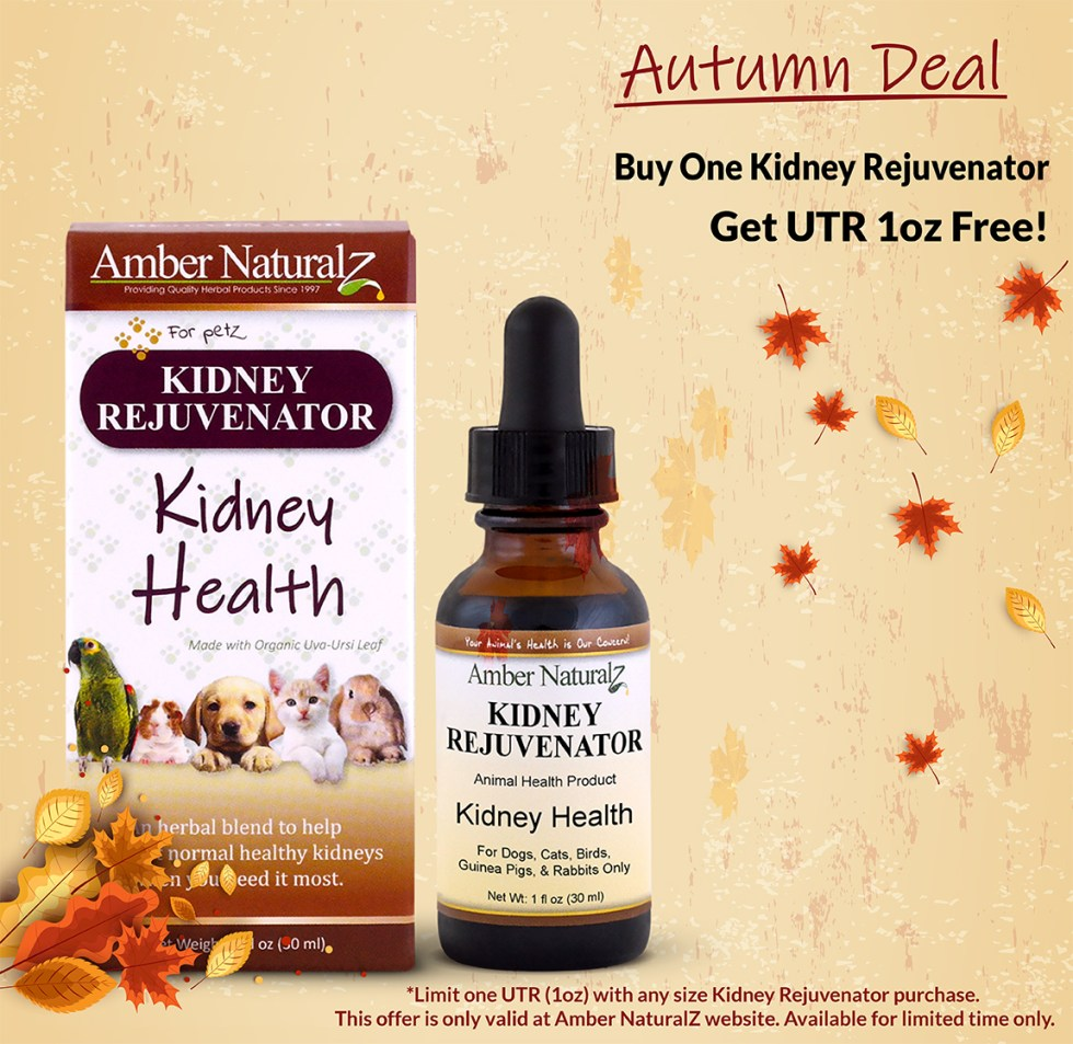 Autumn Deal Kidney Rej featured product 10-6-21