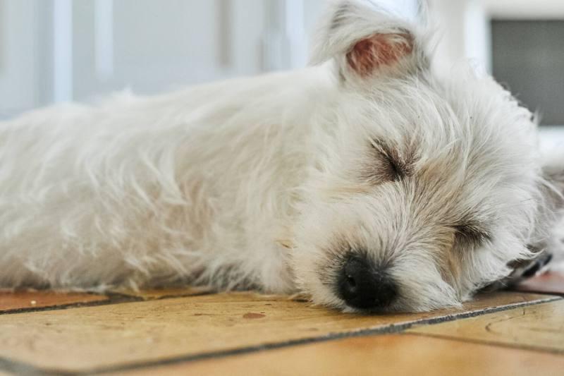 Puppy Roux 102