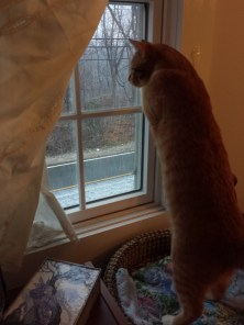 OLLIE'S FIRST SNOW! 2014