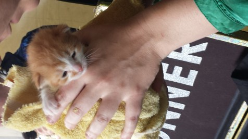 kittens_spwf_2017 (10)