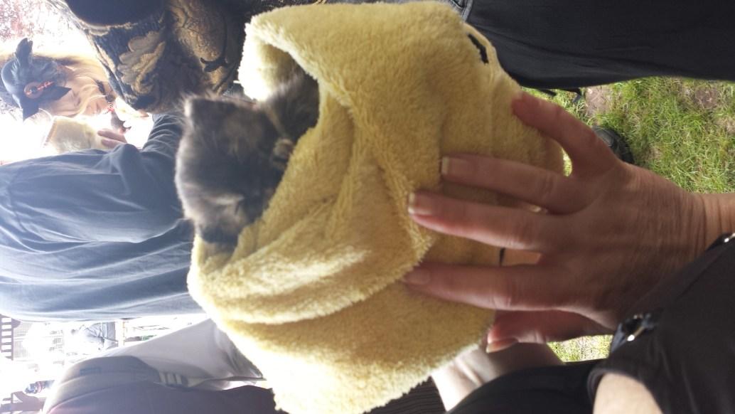 kittens_spwf_2017 (13)
