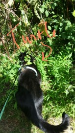 Gus in the bushes with turtle