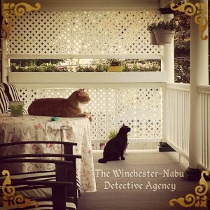 cat detectives