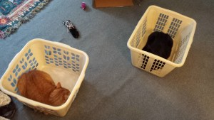 Ollie and Gus in laundry baskets