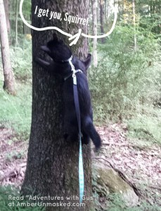 Gus tree climbing