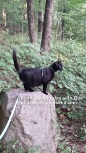 Gus on boulder