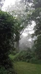 Fog hiking trail