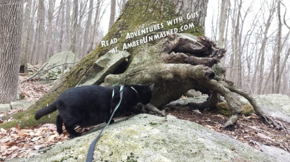 Gus hiking