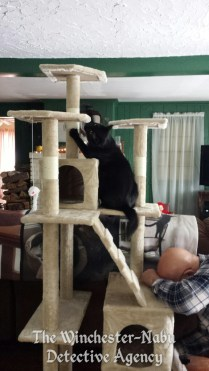 Gus being nuts
