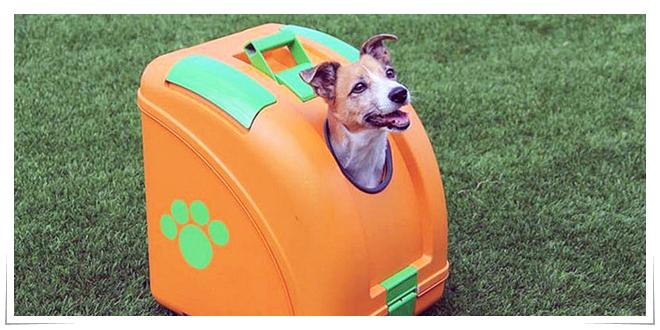 Photo of Transporte de plásticos para mascotas