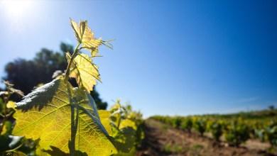 Photo of Agricultores aplicarán pesticidas con drones
