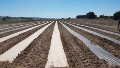 Photo of Smurfit Kappa: sostenibilidad e innovación en el sector agrícola