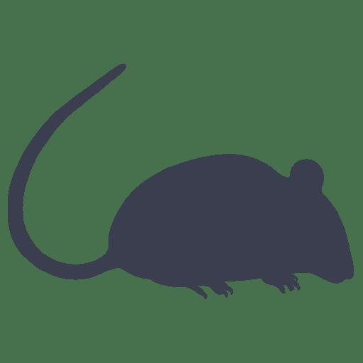Control de ratas en Málaga