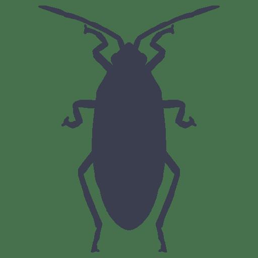 Eliminación de cucarachas, migas, arañas