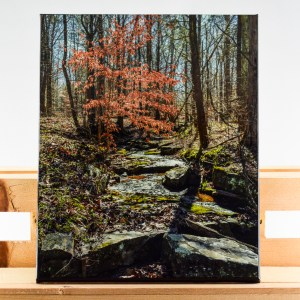 An 11x14 inch artisan canvas print of my image Shine Brightly. Image captured in the Winter of 2017 and canvas created in the Fall of 2018.