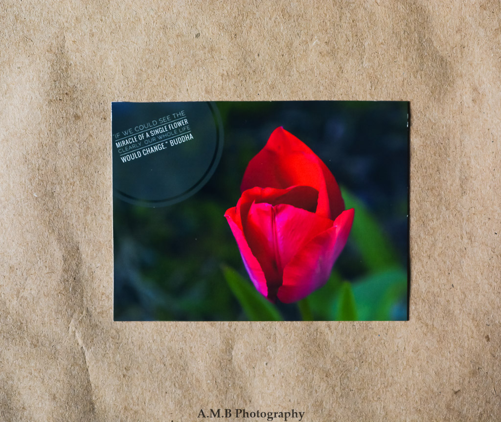 Nature Photo Magnet, Nature Quotes, Photo Magnet, Refrigerator Magnet,  Nature Photography, Red Tulip, Miracle Of A Flower