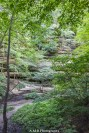 Such beauty at Starved Rock State Park. This shot of the trees and rock wall really highlight the summer greens and browns. And the small creek at the bottom tops it off. :)