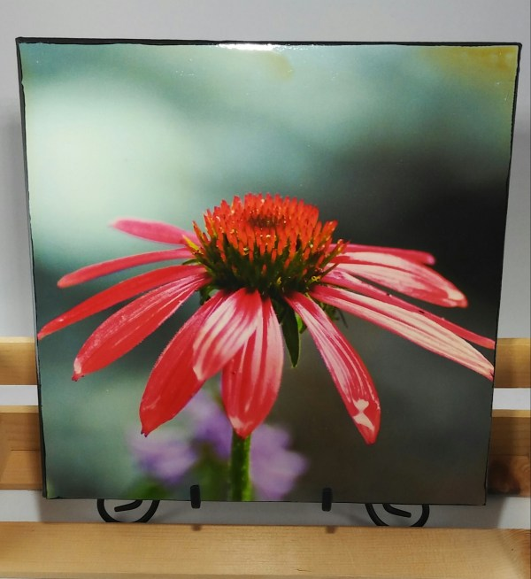 12x12 Canvas of Red Coneflower