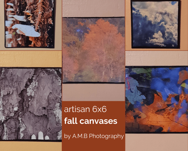 Artisan 6x6 Fall Canvases