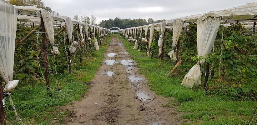 Glastuinbouw bij Rekem in België op een wandeling over het Maaspad van Maastricht naar Berg aan de Maas