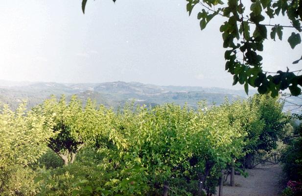 Olijfbomen op wandeling van Pandokratoros naar Vanioutades over Corfu-trail op Grieks eiland Corfu