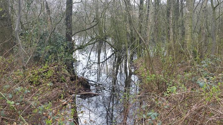 Wandelen over het Groot Frieslandpad bij het Kosterveen in Vries