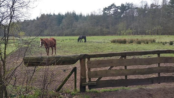 Wandelen over het Groot Frieslandpad door esdorpenlandschap bij Norg