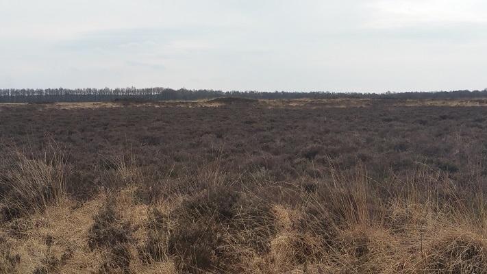 Wandelen over het Groot Frieslandpad over het Noordsche Veld