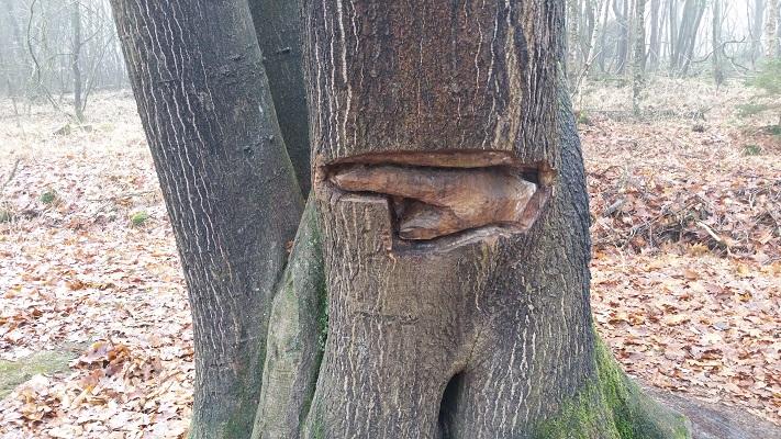 Wandelen over het Groot Frieslandpad langs bomenkunst in Olterterp