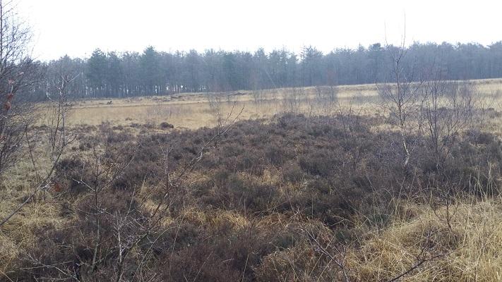 Wandelen over het Groot Frieslandpad door het Blauwe Bos in Haule